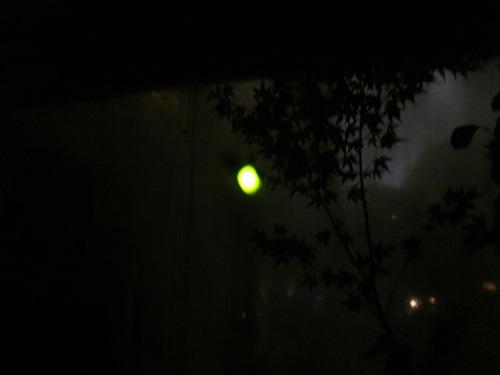 椿山荘で蛍観賞