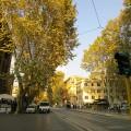 ローマトラステヴェレ地区 並木道