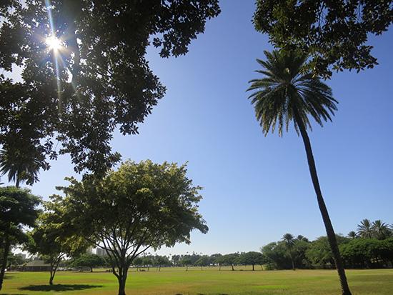 カピオラニ公園の緑