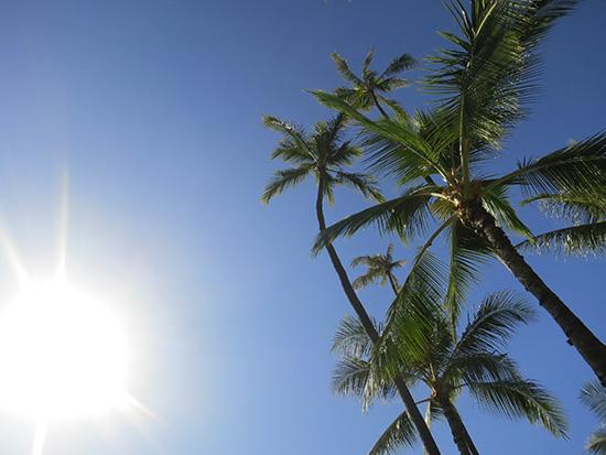 太陽とヤシの木 ザ・ハワイって感じ