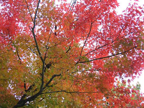 長野 善光寺の紅葉