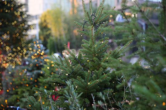 すでに東京タワーはクリスマスツリーがあった