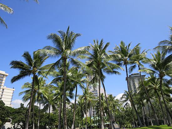 X260を持ってハワイをお散歩中